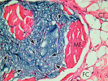 Histology_pic